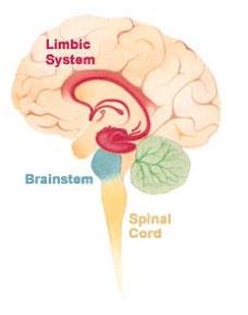 emdr brain